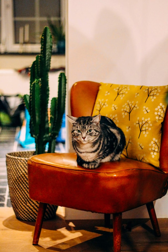 Cat in chair next to cactus